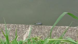 豊かな水源に囲まれた公園には、多くの生き物が生息しています